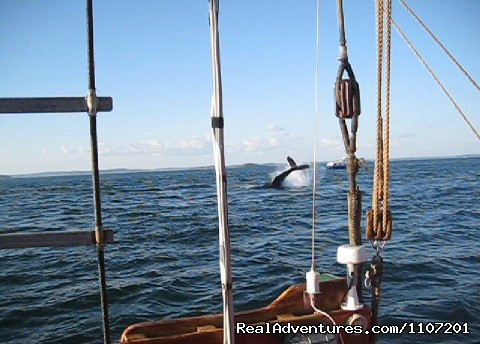 whale tail lobbing (#11 of 20) - Whale Watching