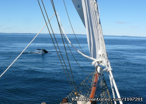 whale tail at bow - Whale Watching