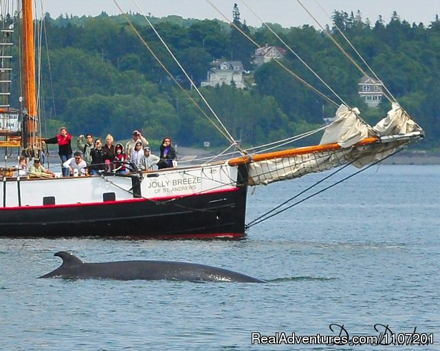 Image #1 of 20 - Whale Watching