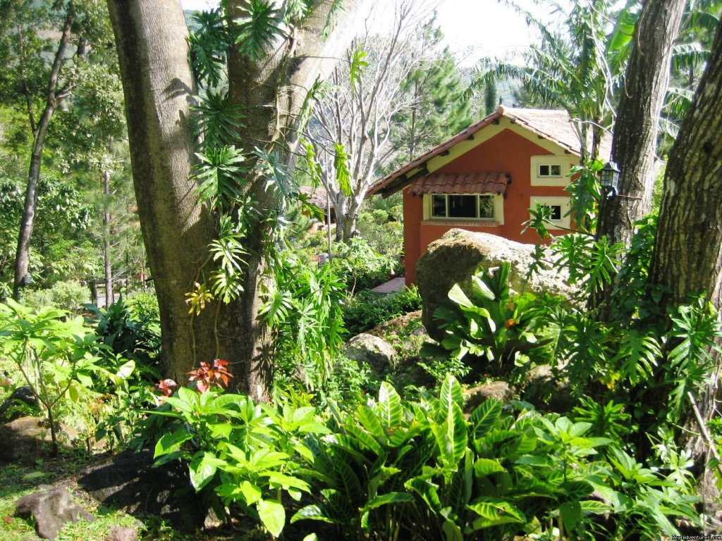 Cabin Gardens | Image #19/22 | Cabins/Cottages for Rent in Altos del Maria