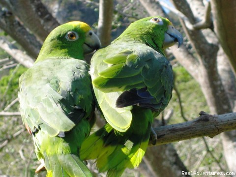 Parrots accross the cabins - Cabins/Cottages for Rent in Altos del Maria