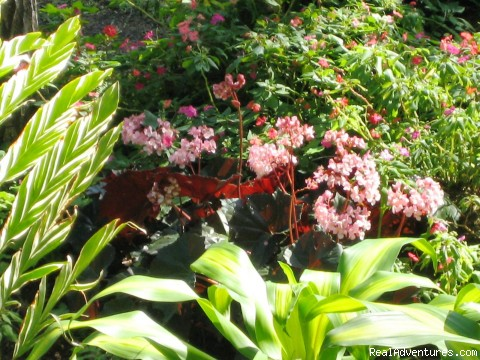 More flowers in cabin gardens - Cabins/Cottages for Rent in Altos del Maria