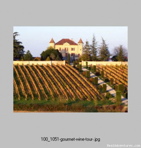 Vineyard on the Lot Valley - First Light Bicycle Tours