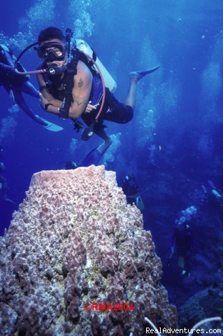 Dive Site: Tackle Box - Immerse Yourself in Our World & Ambergris Divers