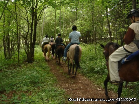 Nature & History Tours- Catskills, Poconos & more New York, New York Eco Tours