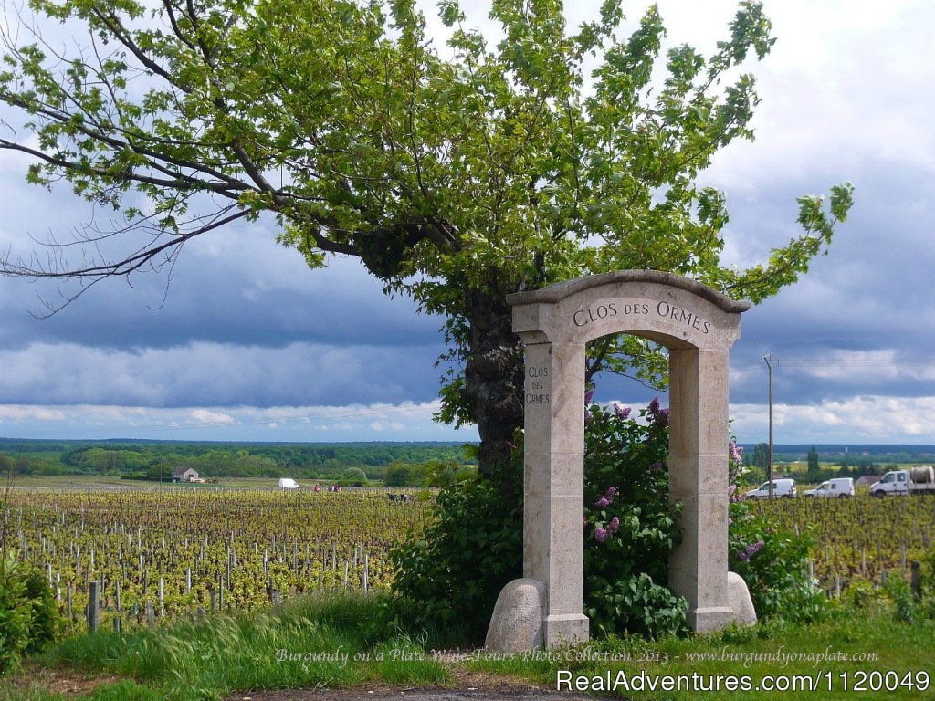 Stunning Vineyard Landscape in Spring - in Cote de Nuits | Image #5/13 | Fabulous Wine and Food Tours in Burgundy