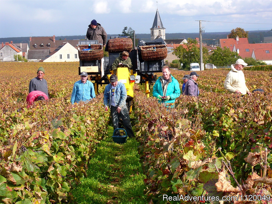 Harvest in Vosne Romanee | Image #9/13 | Fabulous Wine and Food Tours in Burgundy