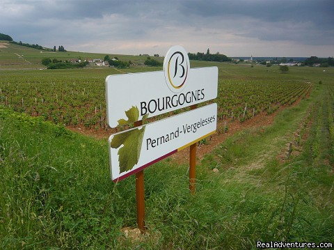 Vineyard Pernand Vergelesses - Burgundy Wine & Food Tour Adventures