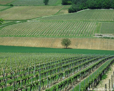 Burgundy Vineyard Landscape | Image #3/13 | Fabulous Wine and Food Tours in Burgundy