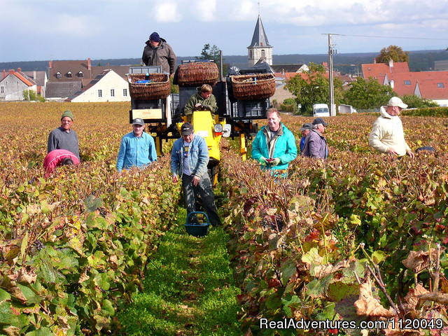 Harvest in Vosne Romanee (#11 of 19) - Exclusive Private Wine & Food Tour Adventures