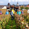 Harvest in Vosne Romanee