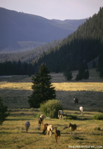 horses grazing in pastrure - Montana Ranch Vacation