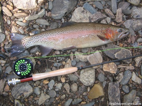 Native Rainbow Trout - Premier Trout Fishing And Cabin Rentals In N.C.