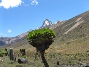Go To Mt kenya Trekking Central, Kenya Sight-Seeing Tours