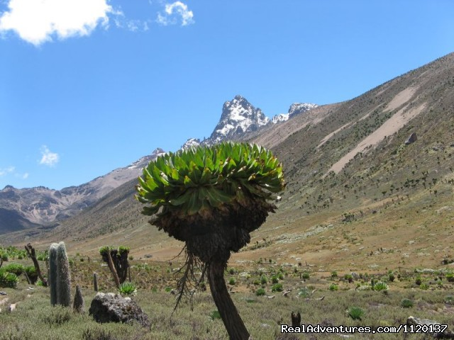 Go To Mt kenya Trekking