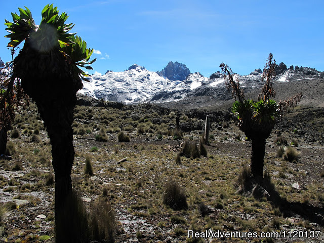 Gotomountkenya with snow - Go To Mt kenya Trekking
