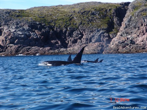 We learn about whales and wildlife - Wildland Tours