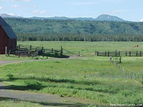 Thurman Ridge - Fantastic Horseback Riding in Yellowstone Country
