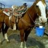Clovis the Horse
