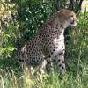 Masai Mara Safari- 3 Days