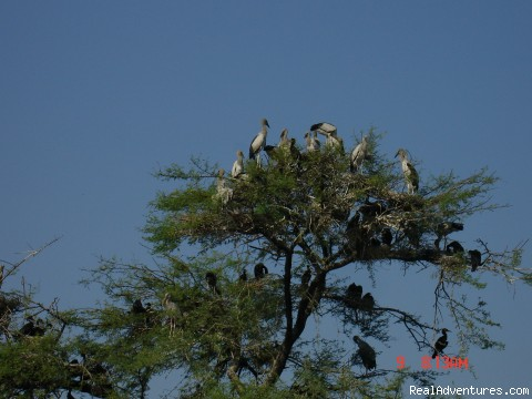Bird watching tours-INDIA by UNI- Crystal Holidays
