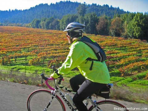 Wine Country Cycling - Road Bike Tours in California - UDCTOURS