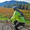 Wine Country Cycling