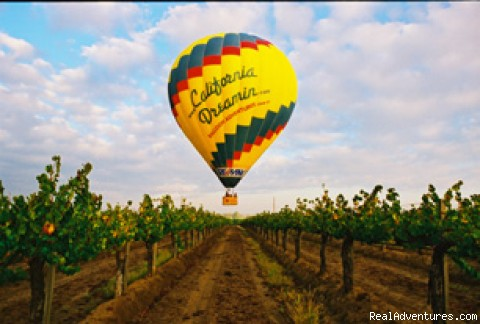 Photo #4 - Wine Tasting Aloft with California Dreamin'