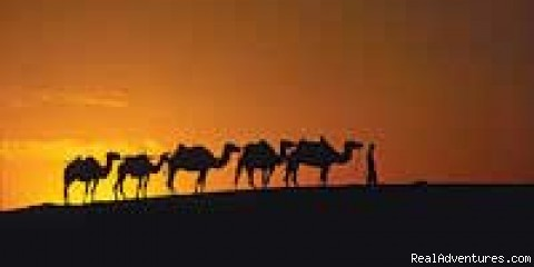 Charity Challenge in the Sahara Desert - Across the Divide Charity Challenges & Expeditions