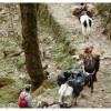 Trekking in Sikkim (India) trekking in sikkim