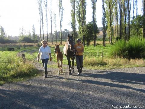 Image #9 of 21 - Horseback riding holidays in New Zealand