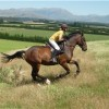 Horse riding lessons and trekking at Kowhai Great farm trekking
