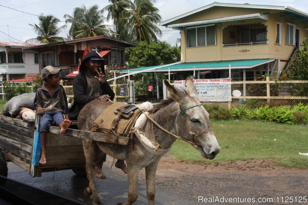 A donkey as their transport option the old way | Image #3/13 | 7 days Three Guianas tour package