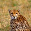 Adventure Joyland Safaris & Tours  Kenya-Tanzania Nairobi, Kenya Wildlife & Safari Tours