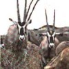 'Adventure  Joyland Safaris & Tours  Kenya-T