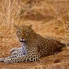 Adventure Joyland Safaris & Tours  Kenya-T