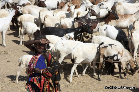 Ethiopia Holidays: Afar girl looking after goats