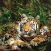 Take A Wildlife Holiday Wildlife & Safari Tours Kanha National Park, India