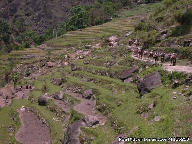 Caravan of Dunkey (#18 of 21) - Annapurna  Circuit  Trek Nepal