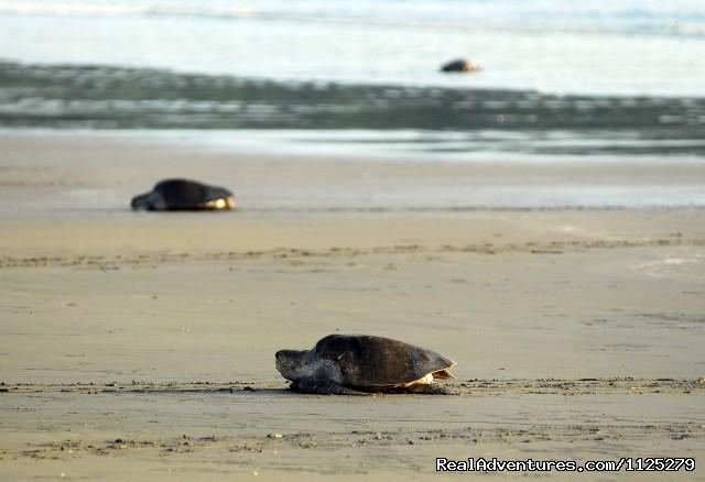 Turtle Nesting (#26 of 26) - Beachfront vacation rentals, San Juan del Sur