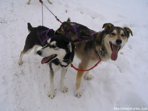 Good Dogs! - Dogsled, Climb, Kayak, Sleigh Ride Duluth MN