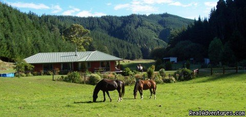 "Whether you are simply looking for a good nights sleep, a quiet break or to experience rural New Zealand to the max, you will find a down to earth, friendly welcome from the people and animals at ""Nutmeg Creek�."