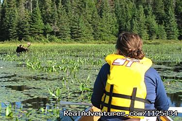 Image #4 of 10 - Algonquin Park Canoe Adventure Trips