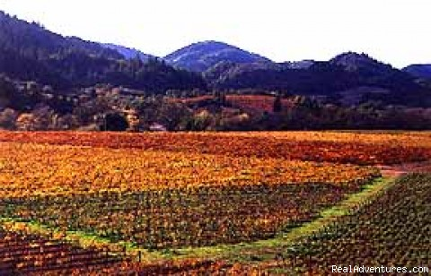 Beautiful Fall Colors in Sonoma - 1-5 Day California Cycling & Multisport Vacations