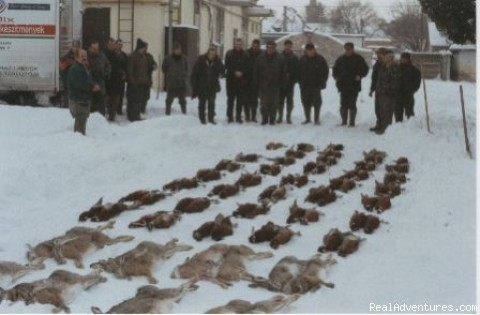 Brown Hare - Euro-Trip, Hunt in Hungary