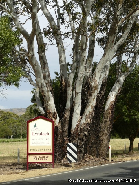 Barossa Premier Wine Country