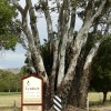 Barossa Premier Wine Country Lyndoch, Australia Bed & Breakfasts