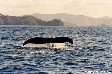 Fabulous encounters along the coast - SCUBA Diving in Costa Rica