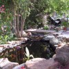 View of Koi Pond