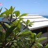 Eco Sensitive Canvas Cottages with ocean view Exterior Cottage